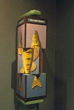 Museum Interactive